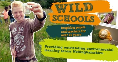 Bugs Wild Schools