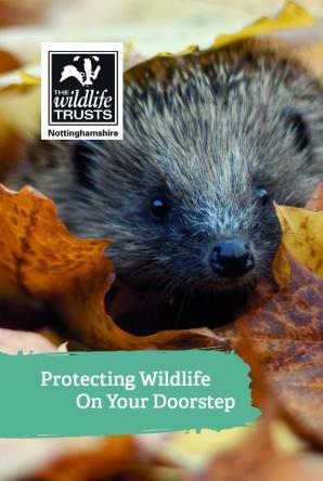 Hedgehog Membership Business Card Front