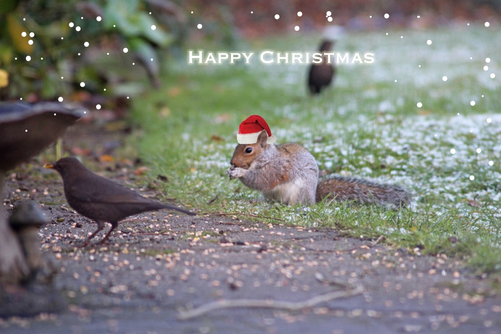 Squirrel Claus